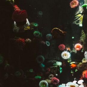 Eine Chance für Freie: Das Riff!